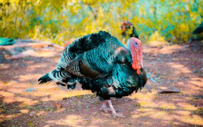 5 Suggestions for a Safe Turkey Hunting